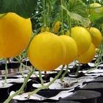 Agro Autopot Systems